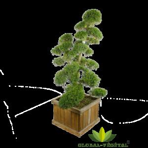 Location de plantes arbre en nuage