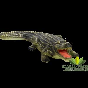 Location d'alligator pour décoration