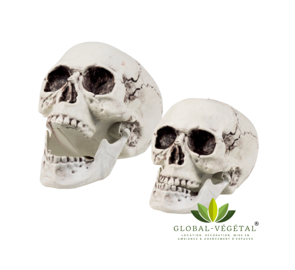 crâne squelette pirates