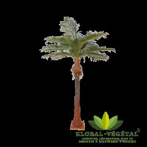 Location de palmier artificiel 6 mètres