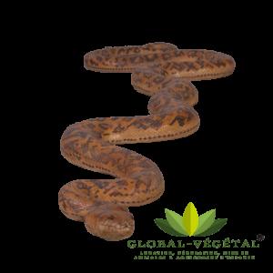 Location de python géant