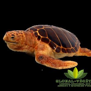 Location de tortue fibre de verre