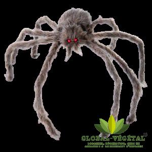 Location d'araignée géante