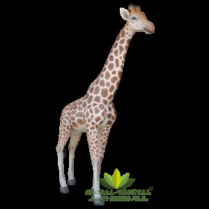 Location de girafe en résine