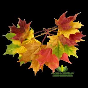Location de feuilles mortes